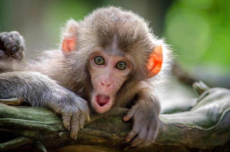 Auch dieser Affe hat die Ausbildung zum Ausbilder bestanden 😉
